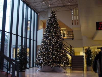 bedrijf kerstboom